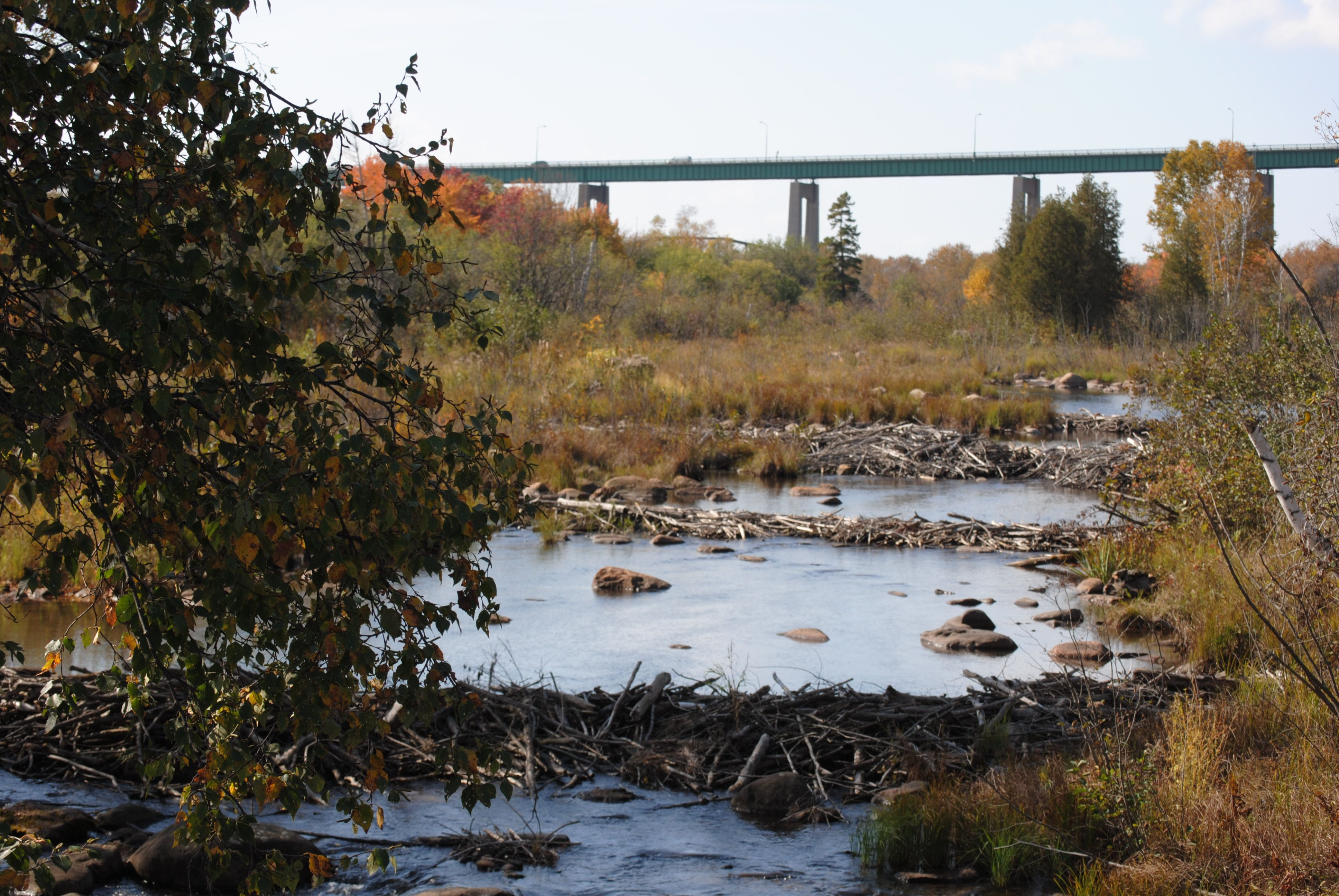 A Collection Of Beaver Dams Adjacent St Mary S Island In Sault Ste Marie Canada Beaver Dam Natural Landmarks