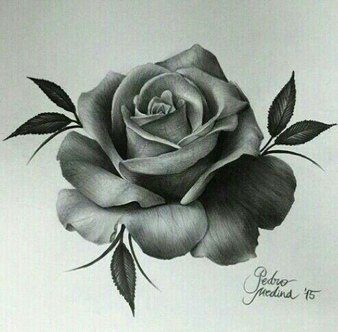 Rose Dessin Tatoo