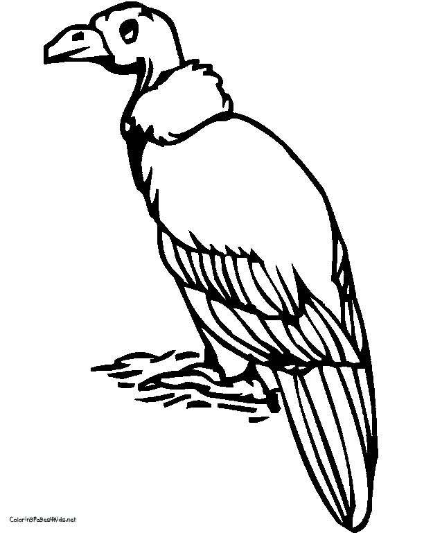 V Is For Vulture To Be Printed Off As A Coloring Page Coloring Pages Color Homeschool Preschool