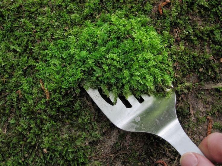 Beau If You Want To Add Moss To Your Pots Or Planters, This Article Explains How  To Establish It And Get It Growing.