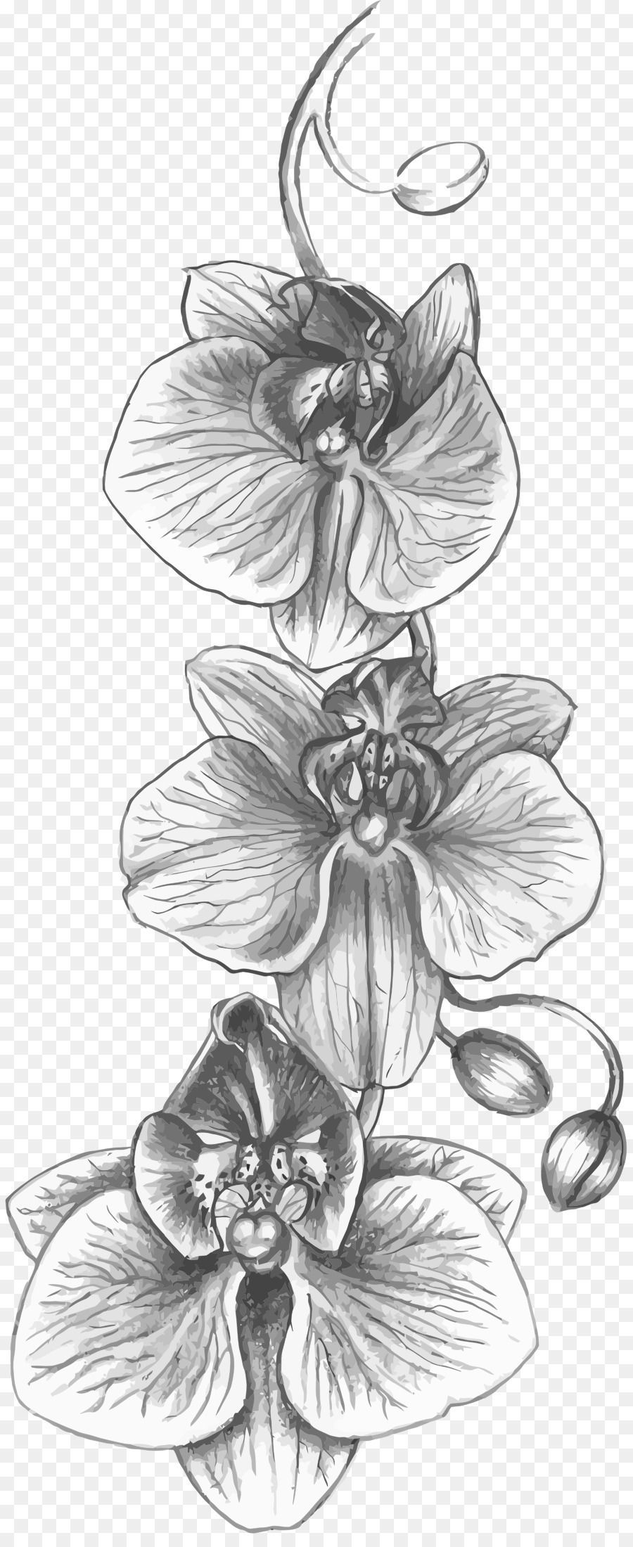 Google Image Result For Https Banner2 Cleanpng Com 20180329 Kzq Kisspng Cattleya Orchids Tattoo Drawing Flower In 2020 Tattoo Drawings Flower Sketches Orchid Tattoo