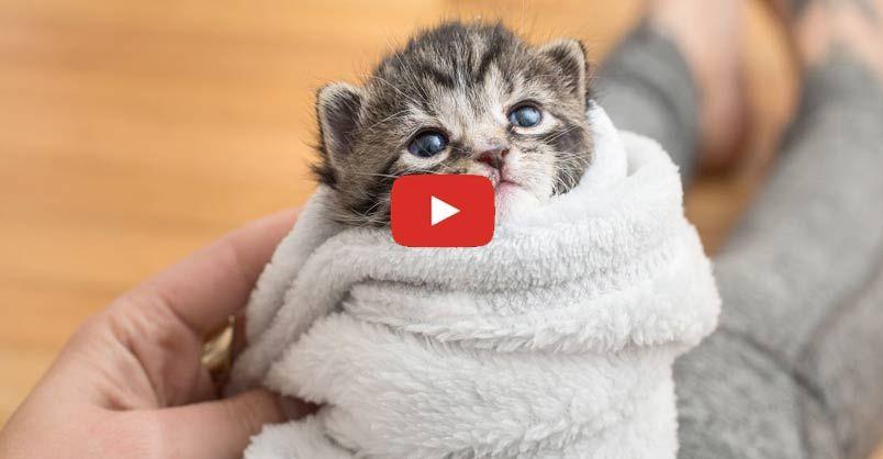 5 Ways To Comfort A Kitten Kitten Care Newborn Kittens Kittens