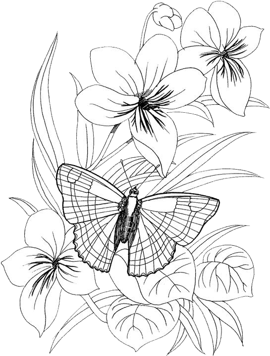 Butterfly Coloring Pages 38 Free Patterns Yarn Butterfly