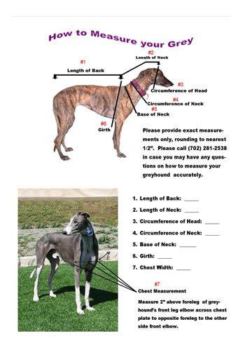 Greyhound Coat Pattern : greyhound, pattern, Measure, Greyhound, Greyhound,, Pattern,, Hound