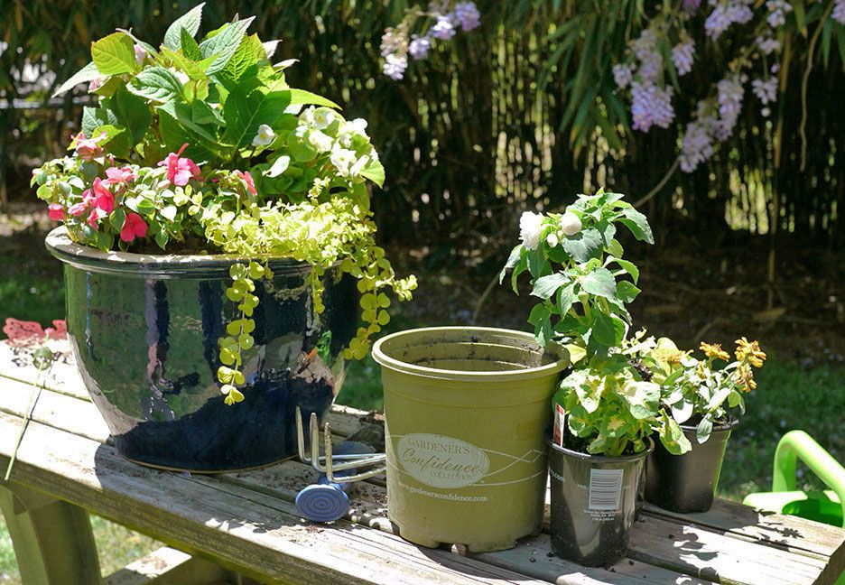 Start With A Mini Penny Hydrangea Combine A Trailing Annual Fill In With Blooming Begonias Beautiful Blooms Bloom Mother Day Gifts