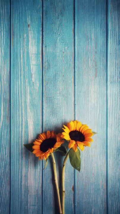 The Latest Iphone11 Iphone11 Pro Iphone 11 Pro Max Mobile Phone Hd Wallpapers Free Download Flowers In 2020 Sunflower Wallpaper Cute Fall Wallpaper Fall Wallpaper