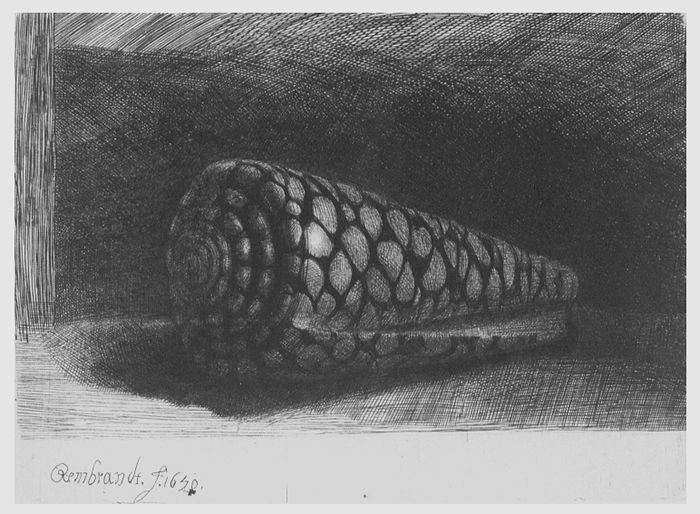 Rembrandt Exhibition Shell : The shell or damier by rembrandt van rijn arty
