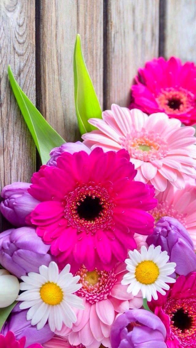 Flower Wallpapers For Iphone Cell Phone Wallpapers Flower Backgrounds Wallpaper For Your Phone