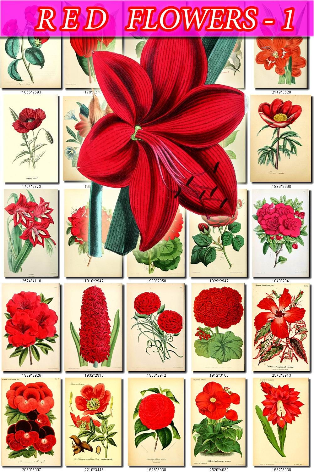 RED-1 FLOWERS Collection of 260 vintage images pictures High ...