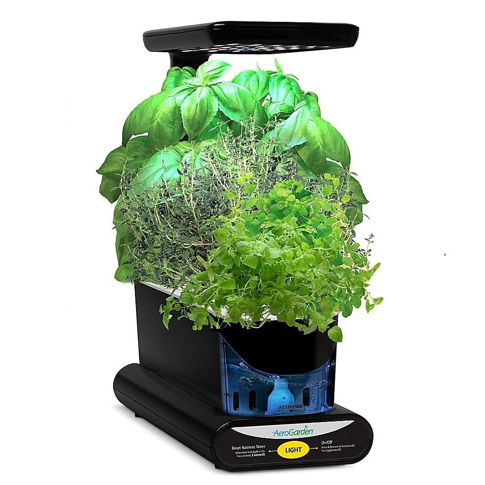 Miracle-Gro Aerogarden Pizza Herb Seeds 3-Pod Kit Multi - The AeroGarden Pizza Herb Seeds Pod Kit lets you grow fresh and flavorful pizza herbs all year round. This Kit works in any AeroGarden (sold separately) comes with everything you need to grow delectable herbs that will take your pizza to the next level.