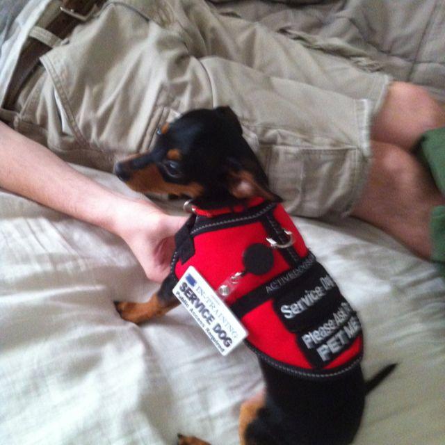 Nugget S Service Dog Vest Service Dog Vests Service Dogs