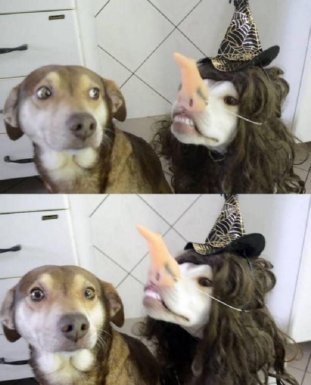 Ximinia Animales Chistosos Memes De Animales Tiernos Memes Perros