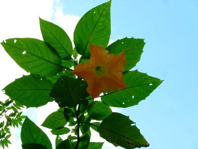 LAOS FLORA | atrativo do Laos, com suas diversas reservas e uma fauna e flora ...