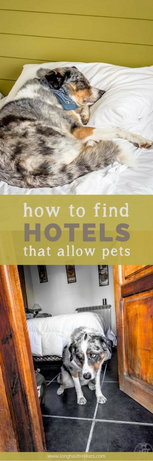 How To Find Hotels That Allow Pets While Traveling Dog Literature