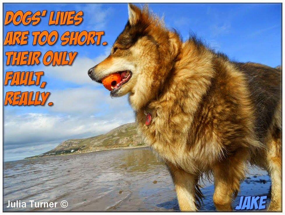 Utonagan Spirit Of The Wolf Dog Quotes Dog Quotes Dog Life