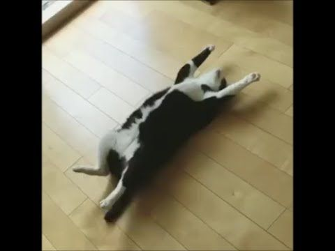 Funny Cats Video 2017 #15
