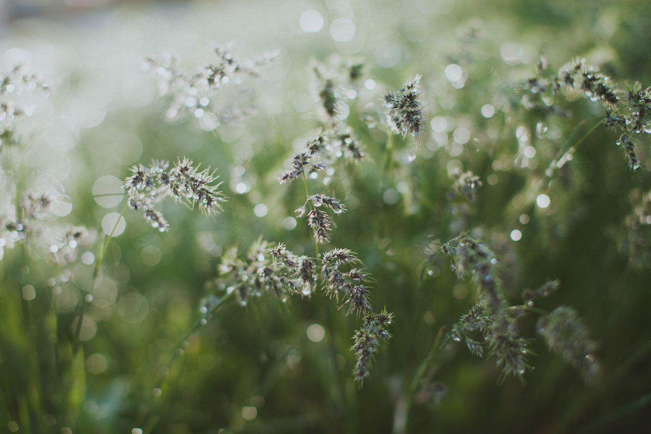 la dama luna - juliamstarr: After The Rain Instagram