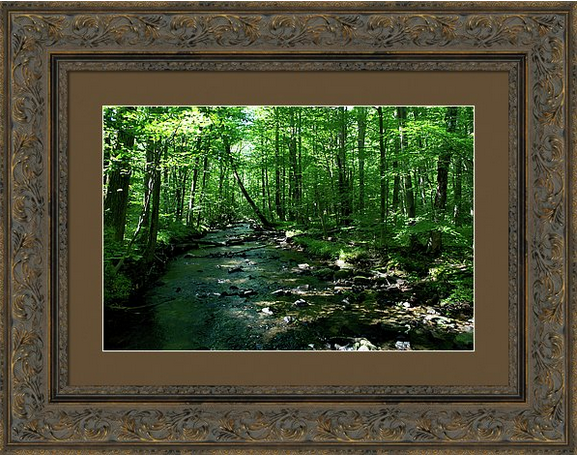 """""""Magic in the Forest 1""""  The forest is always magical to me but this photo really captures it. Maybe it's the rich greens or the thick canopy of leaves? I don't know but I love this place.  #landscape #photography #nature #forests #trees  http://fineartamerica.com/featured/magic-in-the-forest-1-kelly-paal.html?newartwork=true"""
