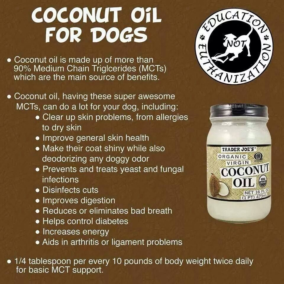 Adding Coconut Oil To My Shih Tzu S Diet Dog Food Recipes Oils