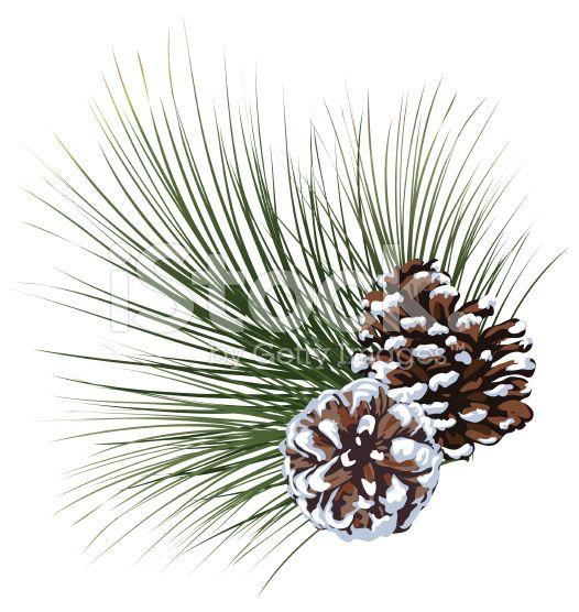 Pine Cones And Pine Needles Pinecones Pine Tree Drawing Pine Tree Painting Tree Drawing