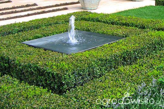 Ogród z lustrem - strona 144 - Forum ogrodnicze - Ogrodowisko