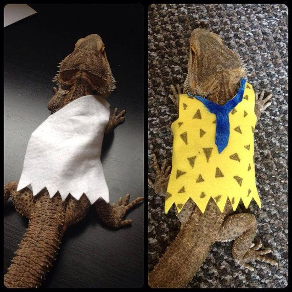 Fred Flintstone Costume Bearded Dragon Clothes Bearded Dragon Cute Bearded Dragon Bearded