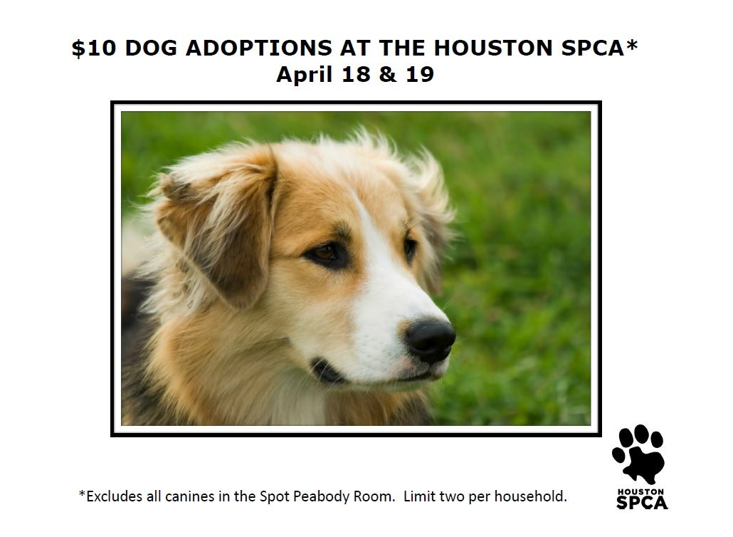 This Weekend At The Houston Spca We Have Many Dogs Looking For Homes You Can Adopt Up To Two For 10 Each Some Restricti Dog Adoption Adoption Options Dogs