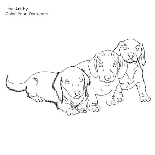 Racing Dachshund Line Art Puppy Coloring Pages Dog Coloring