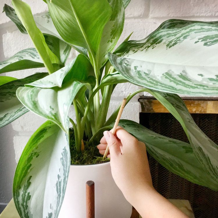 How to aerate your houseplant's soil (and why you should