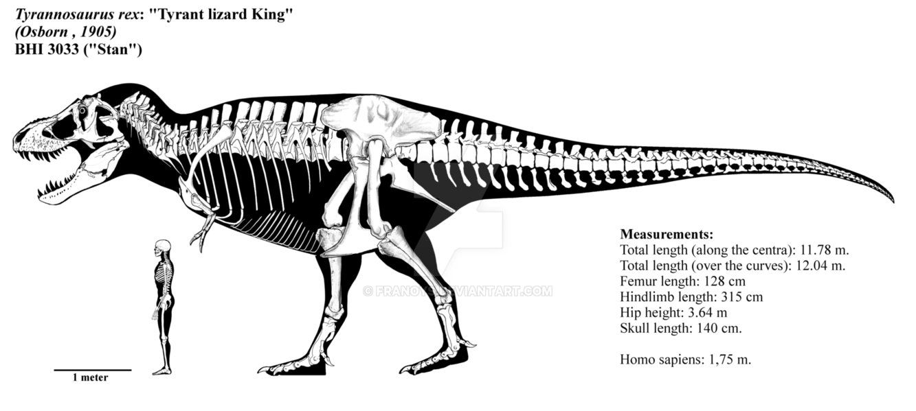 Diagram Picture T Rex Skulls Electrical Work Wiring Diagram