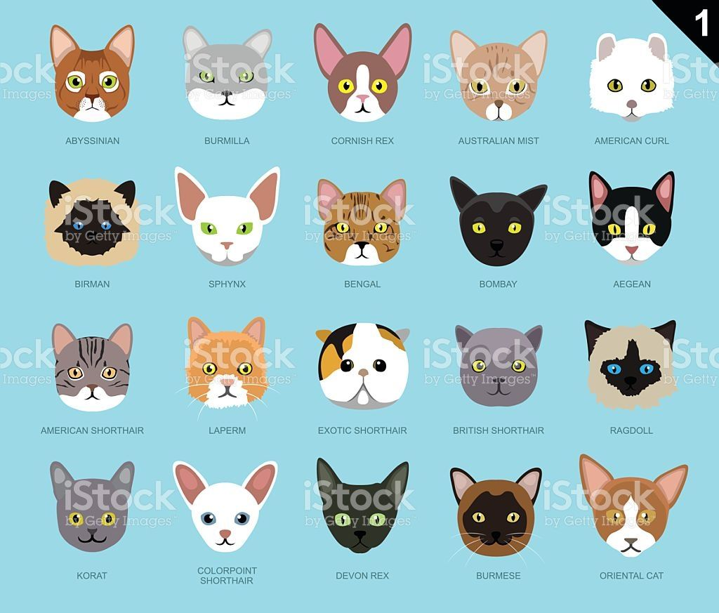 Animal Faces EPS File Format Cat face Vector art and Icons