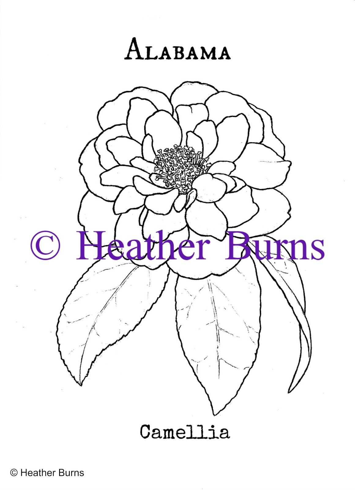 Alabama State Flower Camellia Coloring Page State Flower