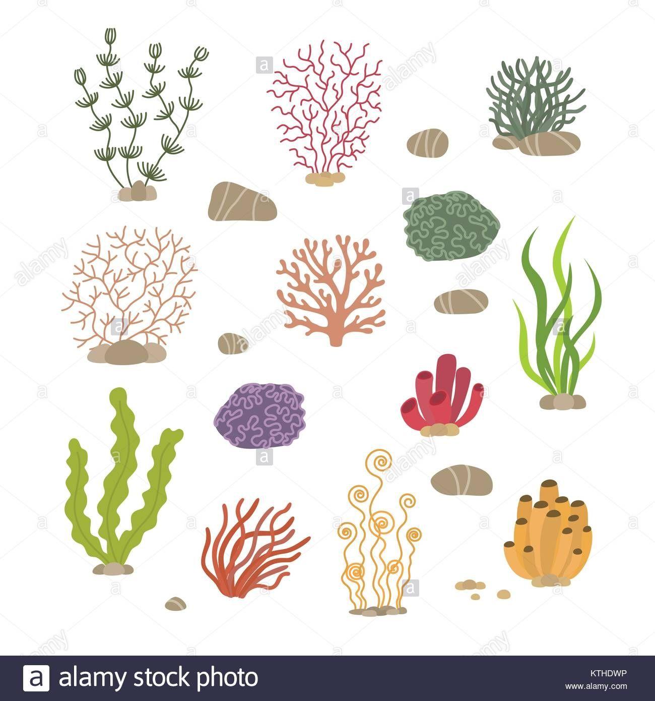 Malvorlagen Unterwasserwelt Algen