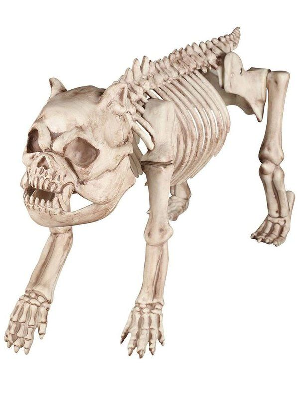 check out bones the dog skeleton prop halloween decor for your home from wholesale halloween