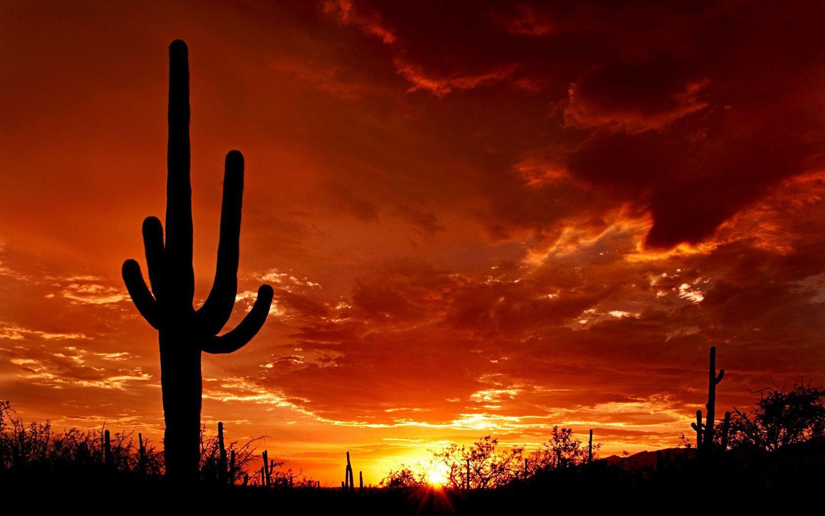 Desert Cactus Wallpaper Hd Wallpaper At Wallpapersmap Com Arizona Sunset Visit Arizona Tucson Arizona Hd wallpaper cacti evening sunset desert