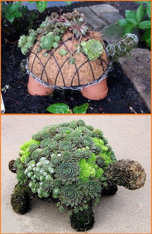 How To Make A Succulent Turtle LO landscape Pinterest Mini