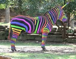 That Looks Cool But Sadly Not Real Rainbow Zebra