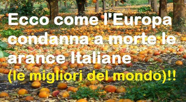 Ecco come l'Europa condanna a morte le arance Italiane (le migliori del mondo)!!