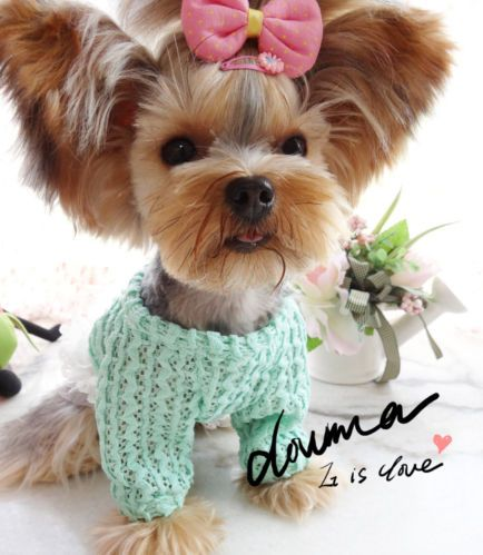 Pin By Tracie Mullet On Pets Cute Animals Cute Dog Tags Puppies