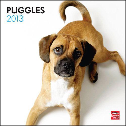 Puggles 2013 Wall Calendar Pets Beagle Breeds Papillon Dog