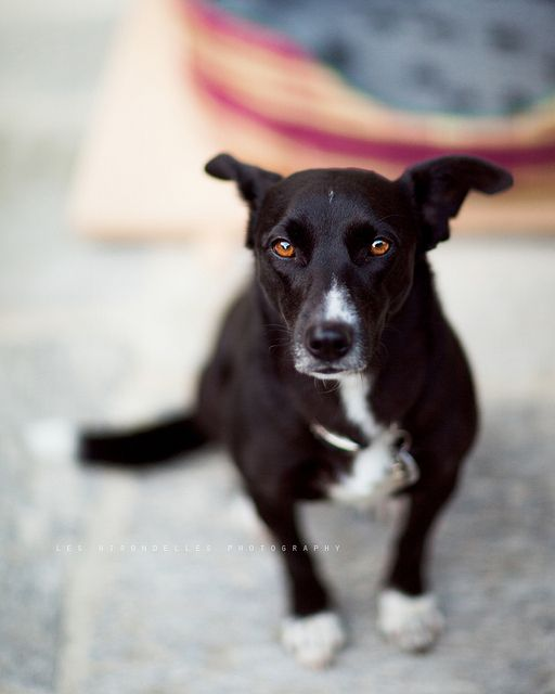 Help a dog!  http://www.adica.org/donazioni