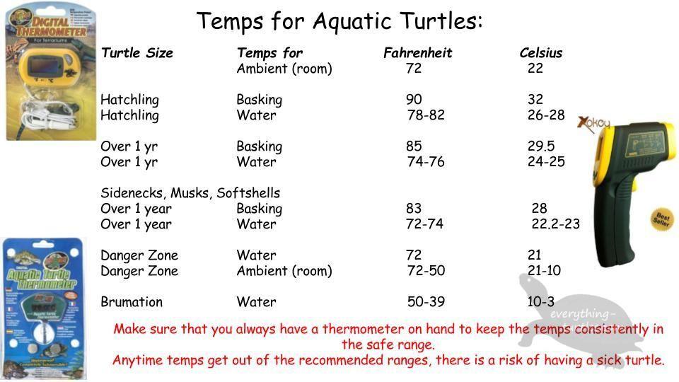 Pin By Jeannie Gates On Turtles Aquatic Turtles Turtle Tank Turtle