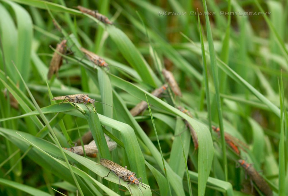 IN THE GRASS (FWBG-1)