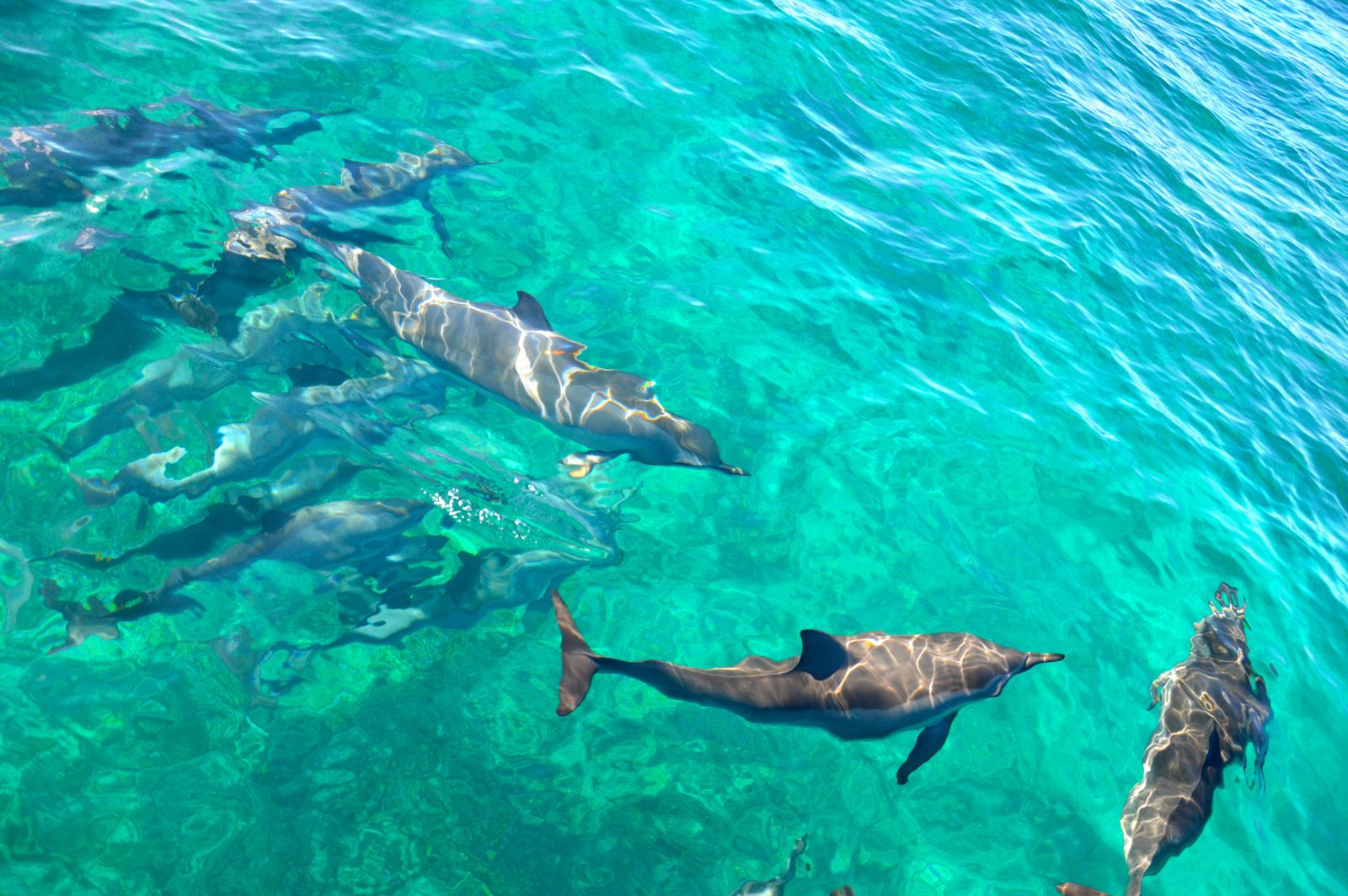 Photo dauphins Mayotte