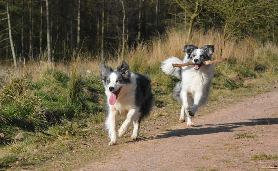 Border Collie Photo By Anne Marie Waugh Border Collie Real Dog