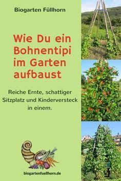 Ein Bohnentipi entsteht | Biogarten Füllhorn