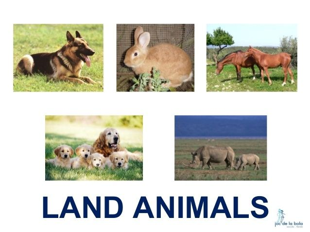 Clipart animals land, Clipart animals land Transparent FREE for download on  WebStockReview 2020