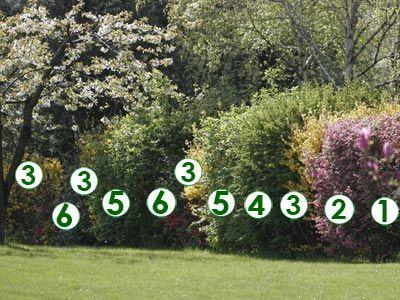 Une haie libre et fleurie (Scènes de jardins) | extérieur | Jardins ...
