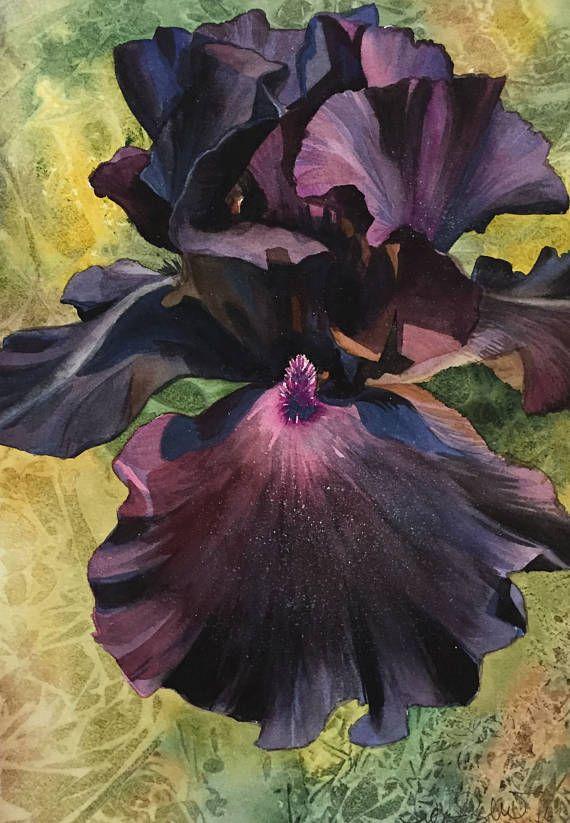Peinture A Laquarelle Iris Noir Iris Noir Aquarelle Rose Iris