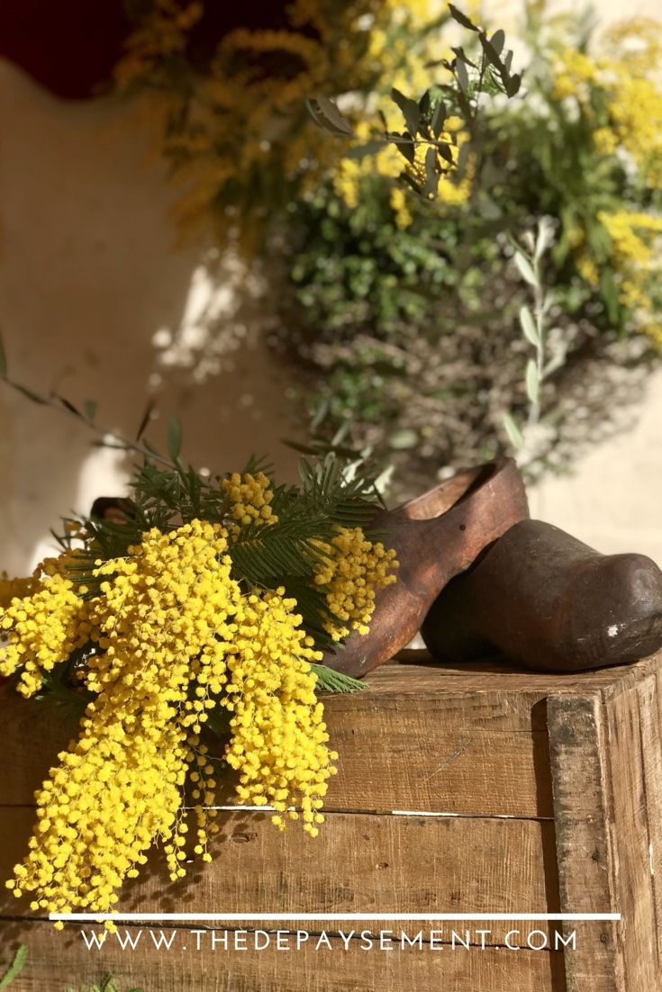 Mimosa Festival   Biot, France This festival is held in ...